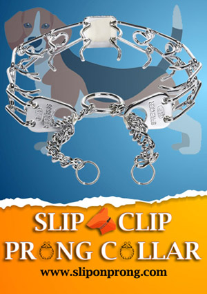Slip and Clip Prong Colla for Beagles