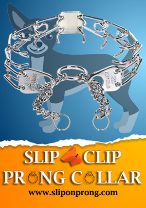 Slip and Clip Prong Collar for Chihuahu